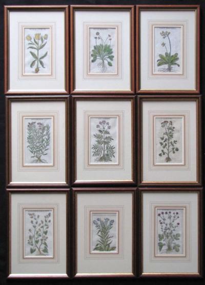 Литографиии с ботаническими рисунками (9 шт)