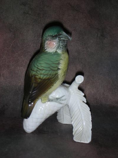 Птица клест на еловой веточке